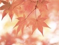 【オンライン予約限定】今ならお得!秋冬の旅