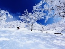 【オンライン予約限定バーゲン】スノーパラダイス北海道